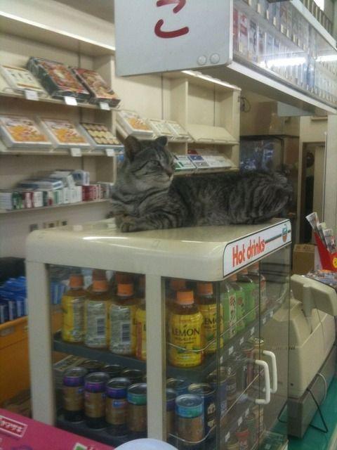 ネコたちがコンビニでやりたい放題すぎるwwww