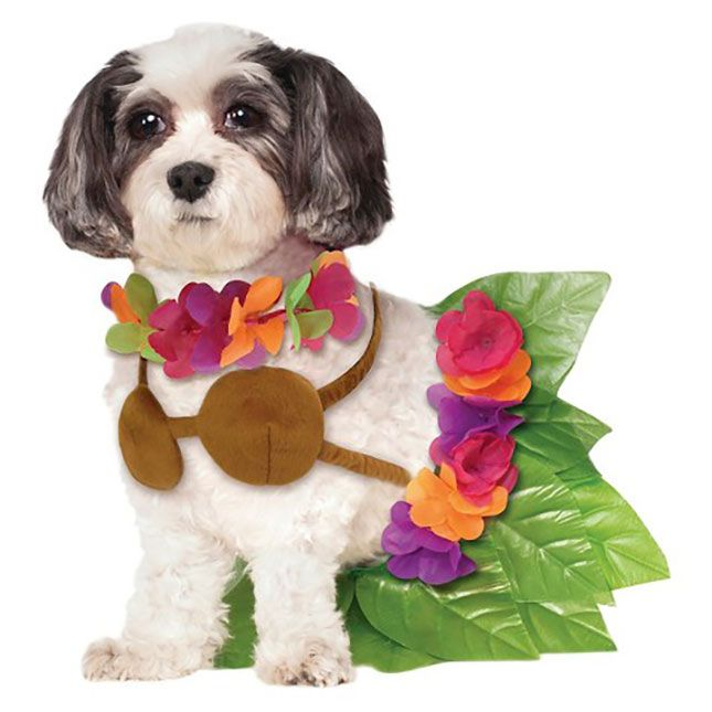 Emejing Girl Dog Halloween Costumes Photos - harrop.us - harrop.us
