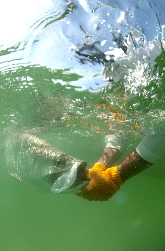 saltwater fly fishing magazine - TARPON on the fly