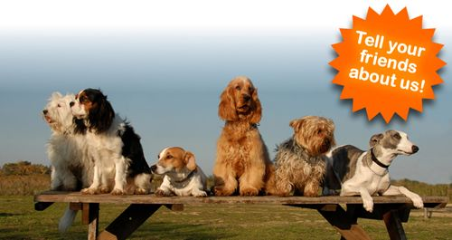 dog treats, dog supplements, treats for dogs, supplements for dogs, healthy dog treats, natural dog treats, best dog treats, dog treats uk --> www.dogtraininginfo.co.uk