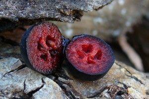 aronia  http://www.biostop.ro/aronia-fructe-uscate-bio-150g.html