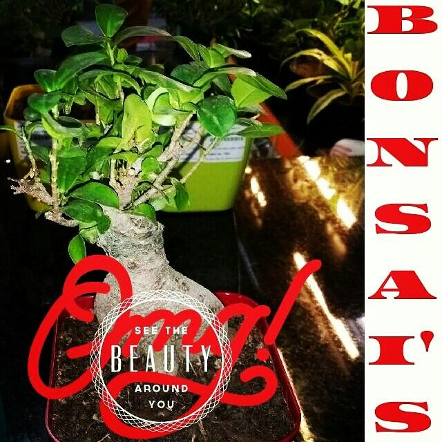 Buy Bonsai in Delhi from Urban Garden, Connaught Place, Delhi 110001
