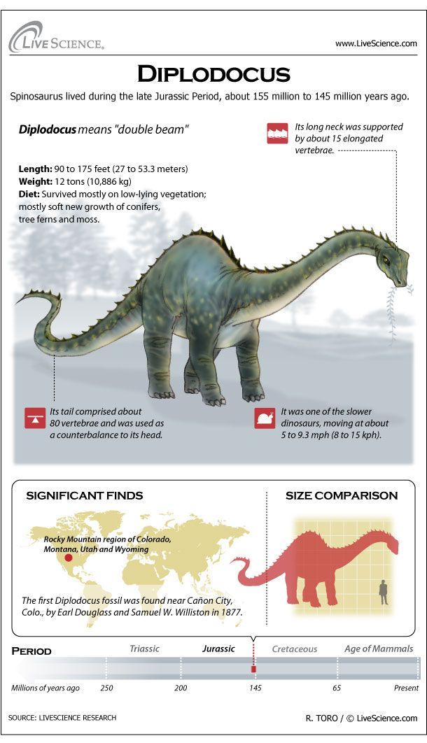 Diplodocus was a long-necked, long-tailed dinosaur that roamed western North America in the Jurassic Period. Its average length was 90 feet (27 meters).