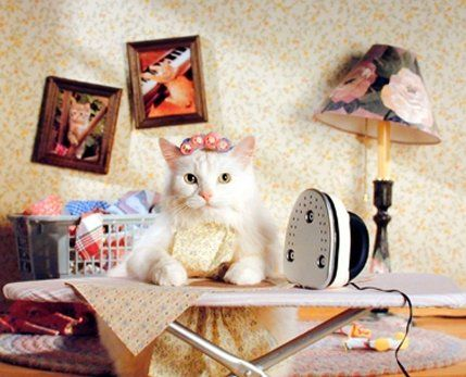 280 best Funny Cat Wall Decor Art Print Posters images on ...