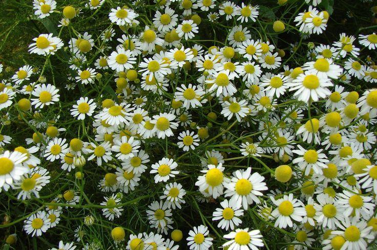 Acompanhe o blog e tenha acesso, de forma simples e fácil, a artigos e dicas de aromaterapia e terapias holísticas.