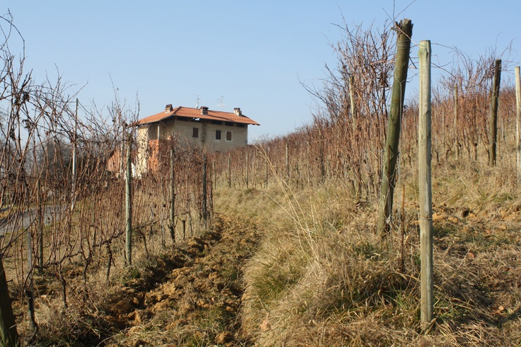 Lessona in the northern Piemont used to be one of Italy's greatest wine regions. Some very enthusiastic people like Luca and Paolo De Marchi (of Isole e Olena9 are now working hard to restore its glory