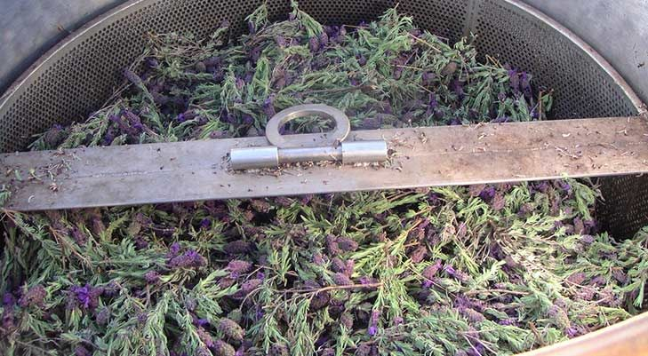 Einfaches Lavendelöl selbst herstellen!