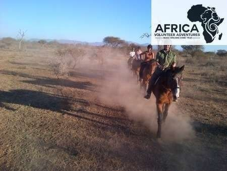 Conservation on Horseback Project with Africa Volunteer Adventures in South Africa 1 or 2 week projects - take a look at www.africavolunteeradventures.com for more