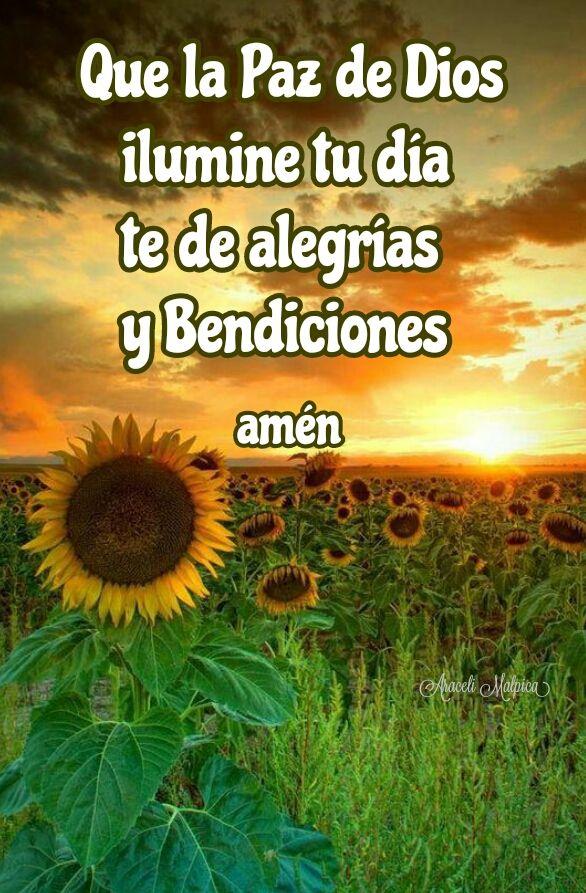 Que la Paz de Dios   ilumine tu día   te de alegrías   y Bendiciones   Amén
