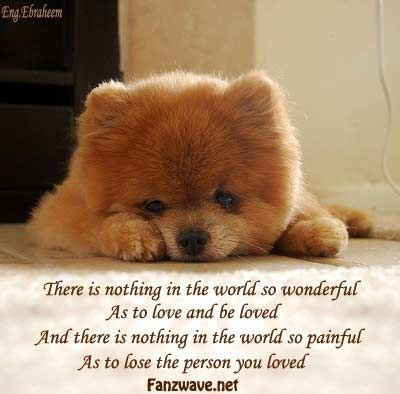 Teenage Puppy Love Quotes : Good Bye Quotes For Dogs sad quotes about life and love. quotes ...
