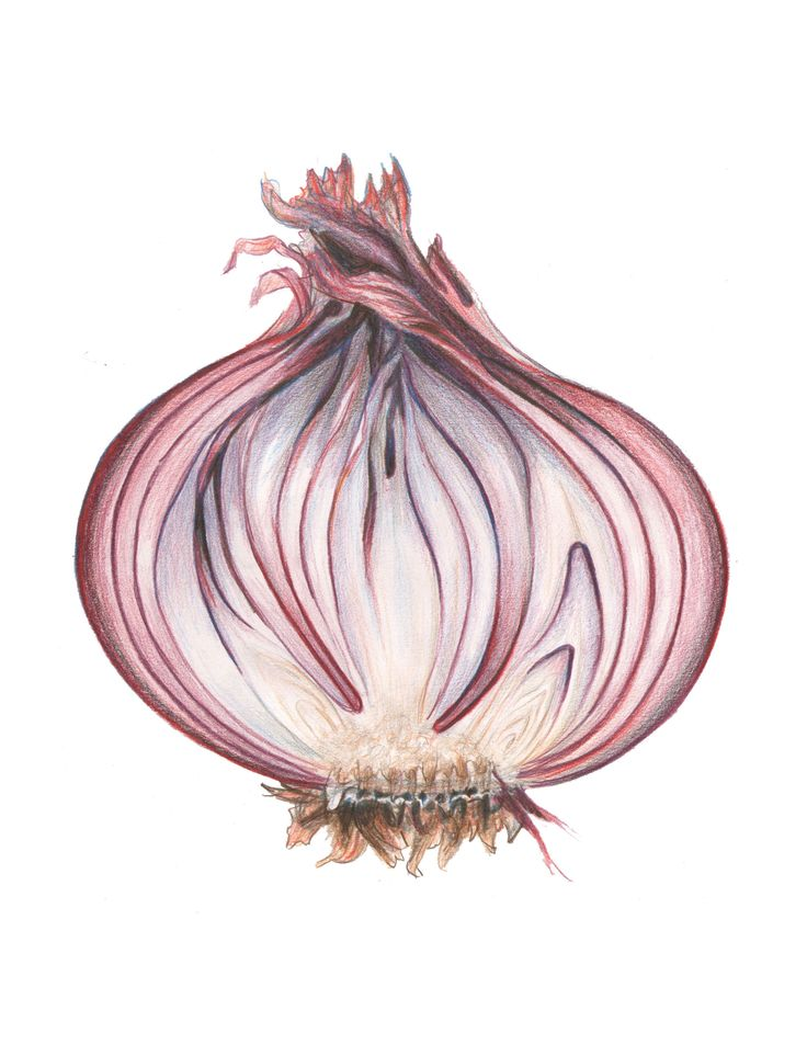 блузка картинки луковицы лука картинки