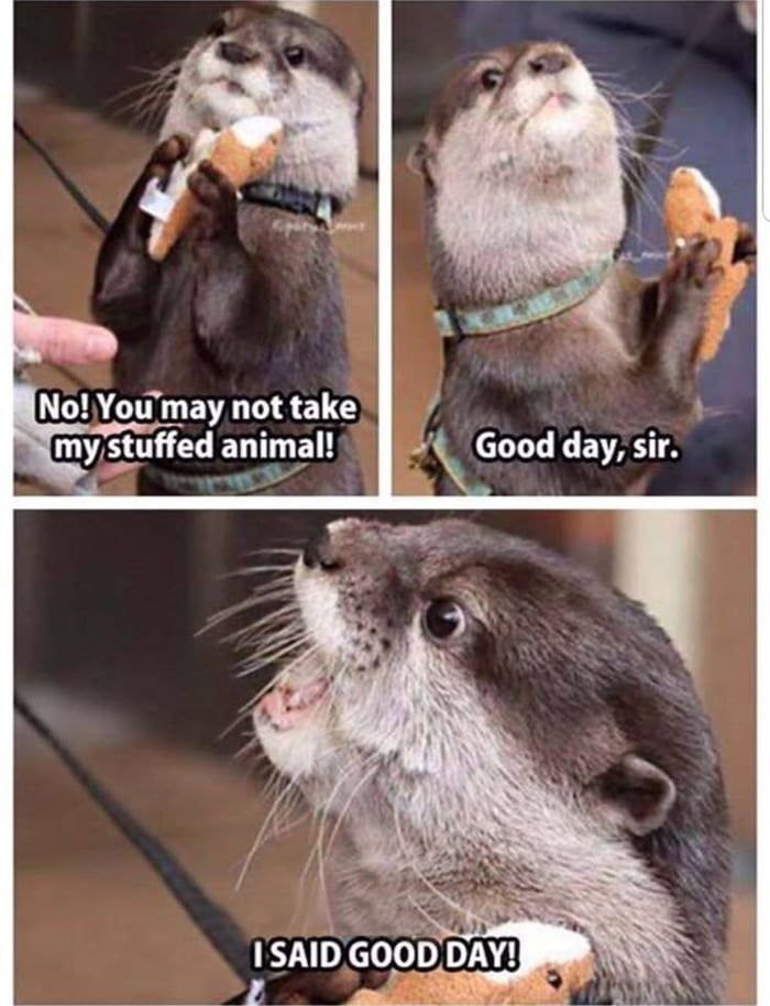 20 Cute and Funny Animal Photos for Your Thursday | Love Cute Animals