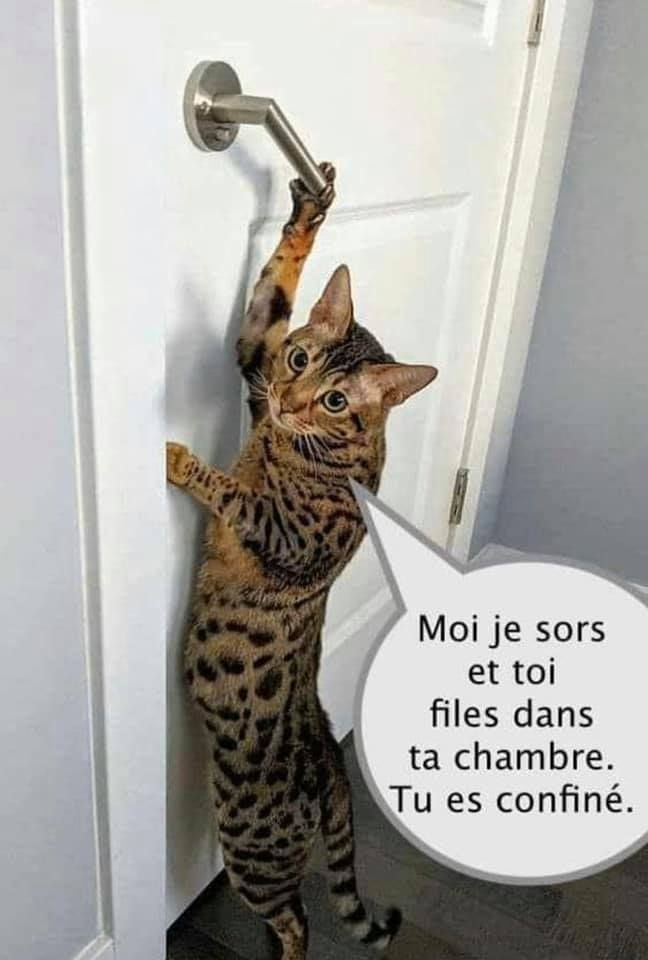 ╔═════╗ ║·····║ ║╚═══╝║ ╚═════╝ | Blague chat, Chats drôles, Humour drole