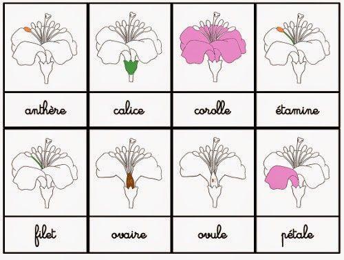 Crapouillotage: Cartes de Nomenclatures : La Fleur [EDIT du 07/03/2015]