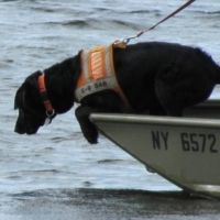 "How to Train a Dog for Search and Rescue Work.  See this ""canine fact sheet"" at the National Association for Search and Rescue Site http://www.nasar.org/page/49/Canine-Fact-Sheet"