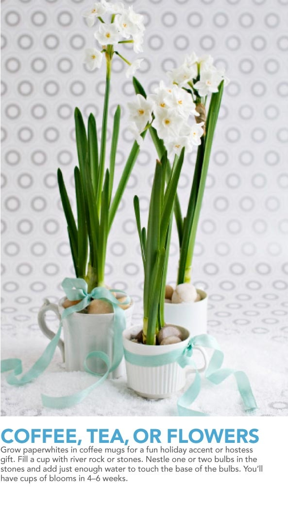 Paperwhites for a January wedding