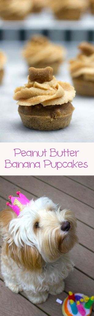 Winnie the Labradoodle's First Birthday -- Peanut Butter and Banana Pupcakes and a dog birthday! | wearenotmartha.com
