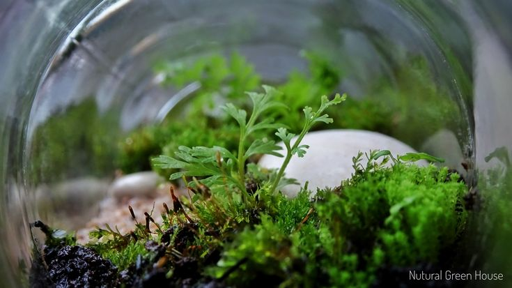 Terrariums. Instagram: natural_green_house or #naturalgreenhouse