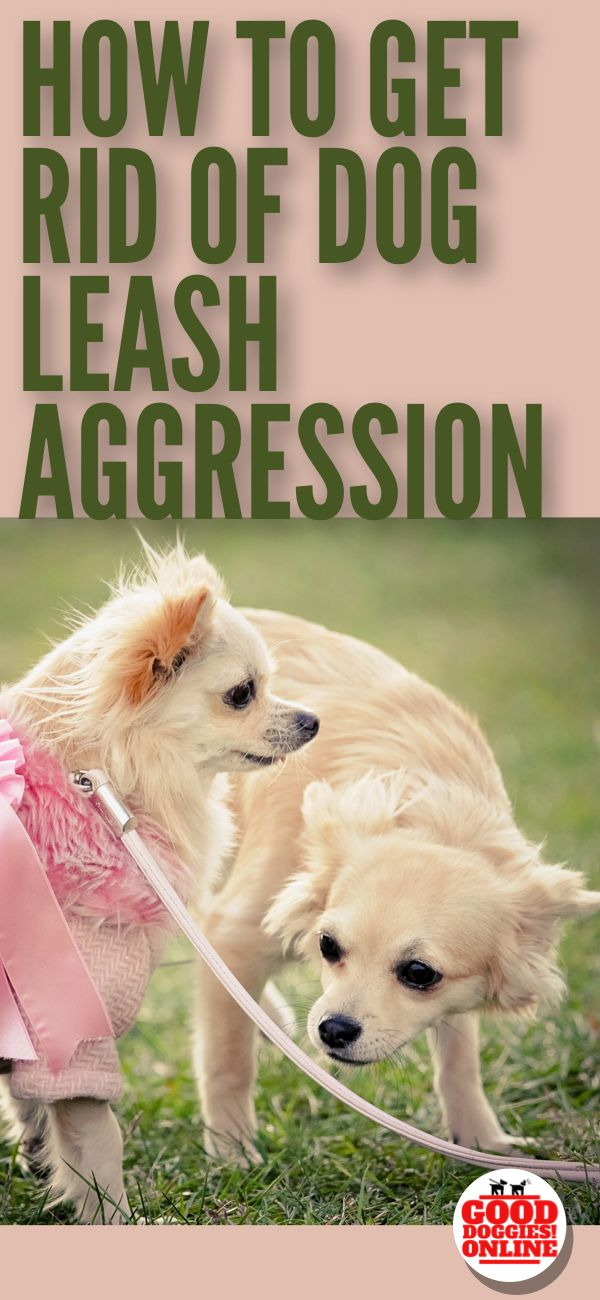 If Your Dog Gets Aggressive On The Leash Around Other Dogs It Can