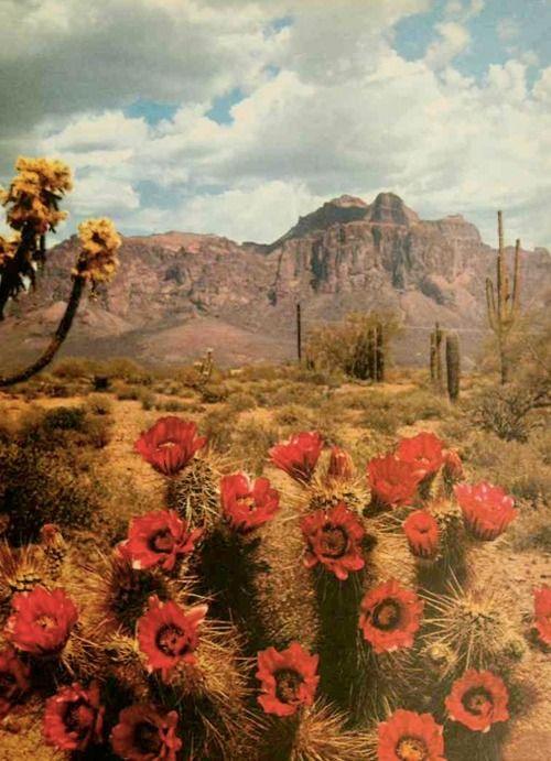 residuetrail:  Desert Beauty - Charlotte Jeanes 1962
