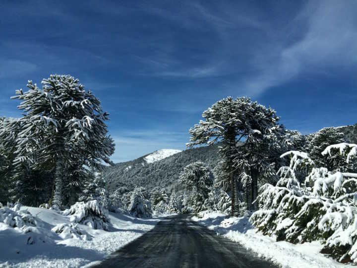 Reserva no sul Chile tem atrações para toda família no inverno