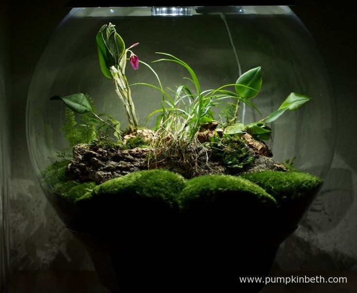 Here's my BiOrbAir terrarium after the re-arrange, as pictured on the 14th January 2016.  Prior to this photograph being taken, I took out all of the plants and compost, then added brand-new coir compost, that I purchased from Reef One, and new moss.  I re-planted some of my old ferns and added some new miniature orchids.