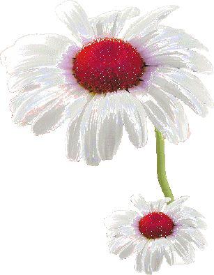 Gif, Png, kwiaty i inne- obrazy transparentne: GIF