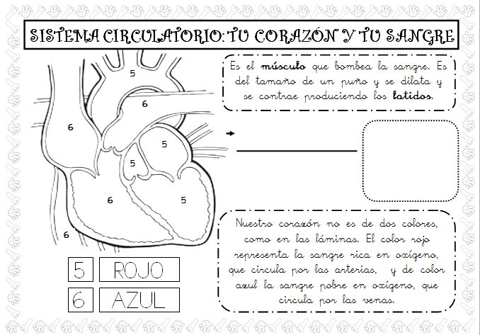 Plastificando ilusiones: Esta semana tocaba el aparato circulatorio