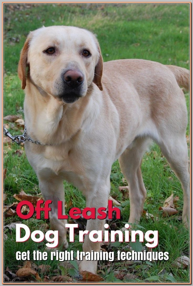How To Train Your Older Dog To Walk On A Leash And Pics Of Puppy