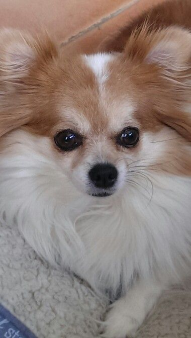 Join an amazing pet group on facebook Jamie a little white chihuahua ALL welcome!!!