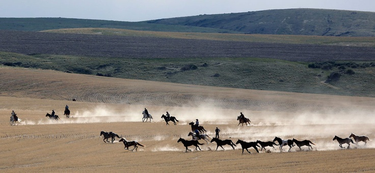 Wranglers gather a herd of horses off the winter range south of Three Forks, Montana, on May 4, 2012