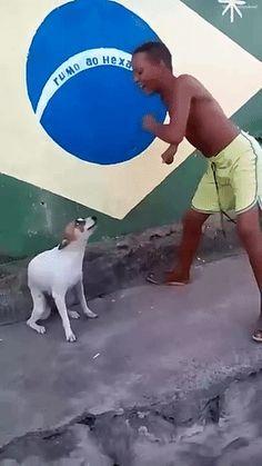 #GIF #Animation #Funny #Dog
