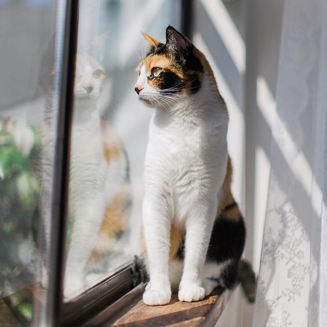 A beautiful calico kitten enjoying the view and the sunshine