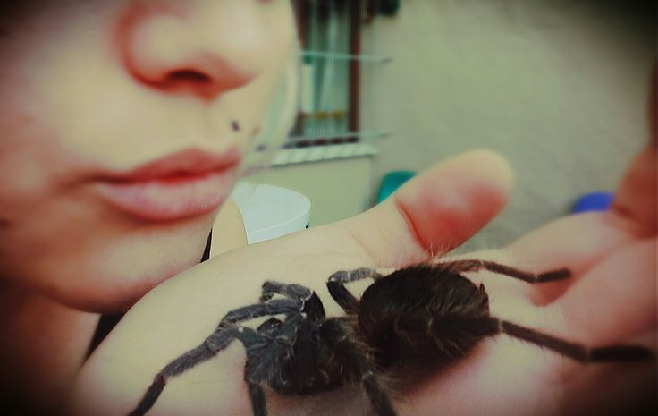 See a spider, pick her up and the whole day you'll have good luck! #spiderlover #goodlife