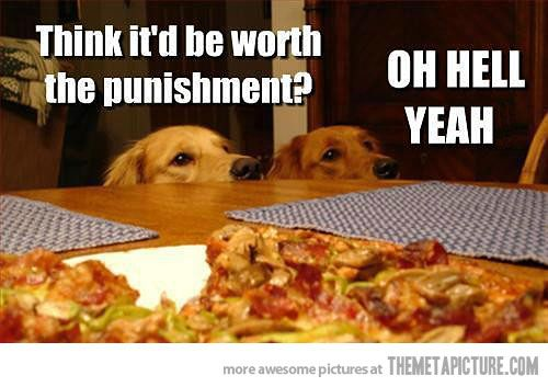 I have no doubt in my mind this goes through my dog's head everytime she's bad.