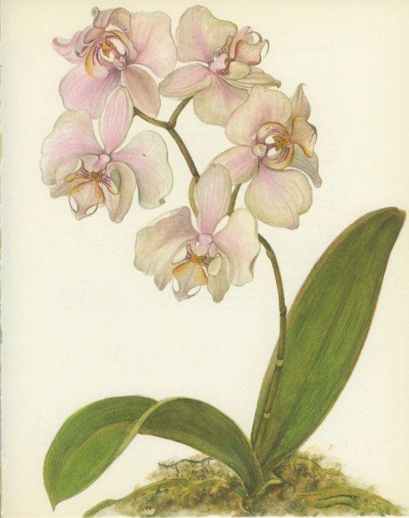 vintage flower print - Google Search