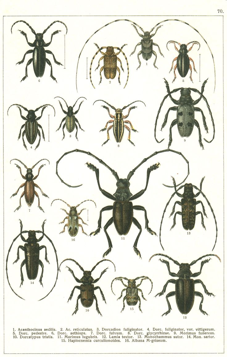 186 best insect illustrations images on pinterest insects