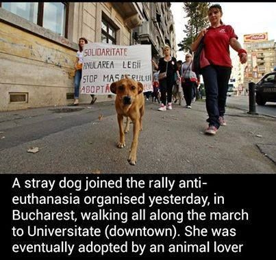 This is what I will call a LOVESTORY!!!! The dog joined the demonstration...and got a home!!!! Bless the one who took him/her into their home STOP KILLING THE DOGS IN ROMANIA!!!!!!
