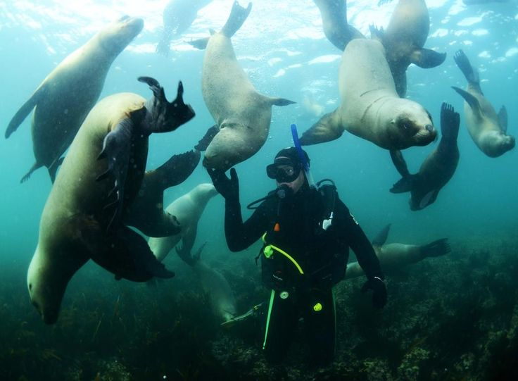 Buceo con lobos marinos, #Chubut.  Créditos: Sergio Mazzaro  Más info en www.facebook.com/viajaportupais