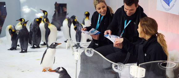 MAQ Penguin Homepage