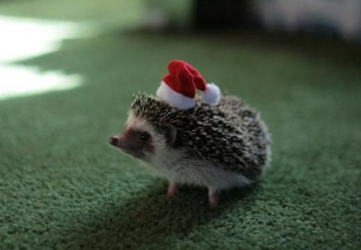 Ready for christmas