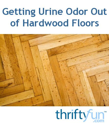 17 Best Ideas About Pet Urine On Pinterest Cat Urine