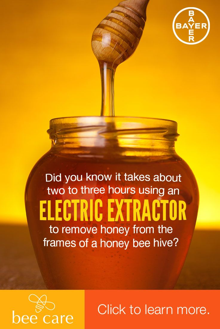 the importance of the north american honey bee This is one the beautiful native north american bees that has been given   collapse disorder and the general importance of honey bees to the.