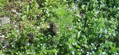 Femlora: miniatural natural ... :)
