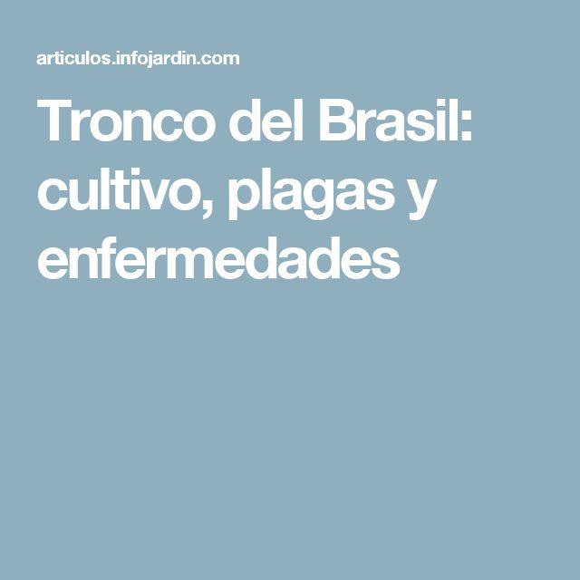 Tronco del Brasil: cultivo, plagas y enfermedades