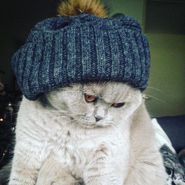 Lilah Cat | Pawshake