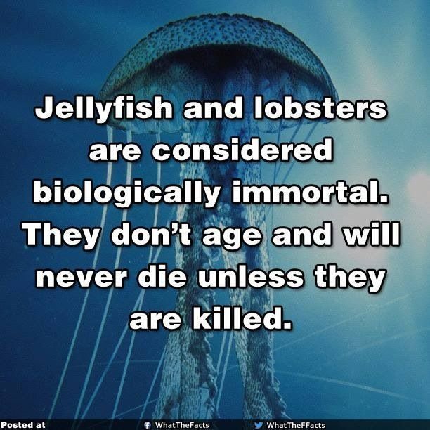 ... Whoa! Seriously? Imagie if we injected Jellyfish DNA with Human DNA. An Immortal Human?