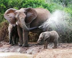 Image result for addo elephant national park
