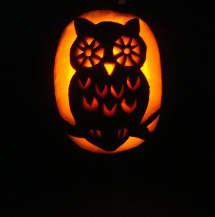 Owl pumpkin carving halloween with d