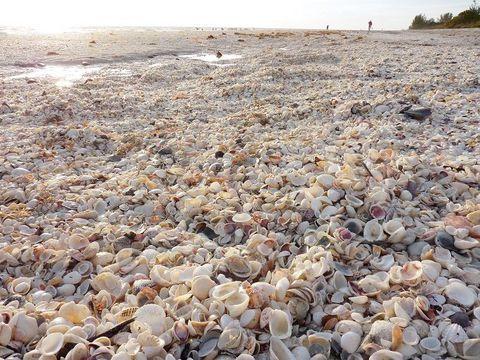 アメリカ・フロリダ州サニベル島のシェルビーチにて。Shell Beach, Sanibel Island in Florida.